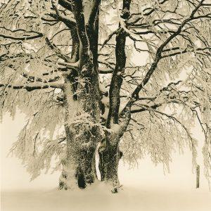 Print Baum Lith-HP
